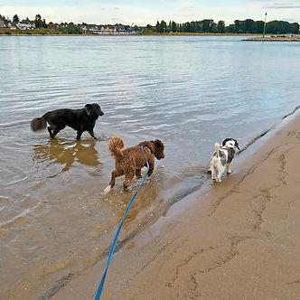 dogwalk_IMG_E9942.jpg
