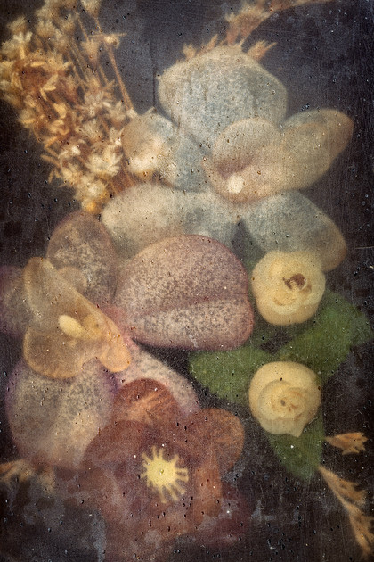 Kim Windmolders - Celebes - Phantom Flowers Series