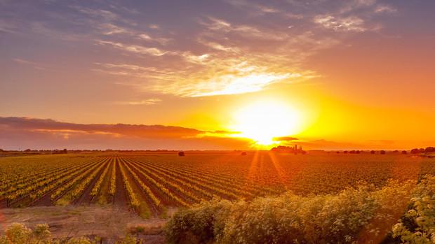Clarksburg, CA Vineyards