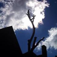 Jason in tree bicep.JPG