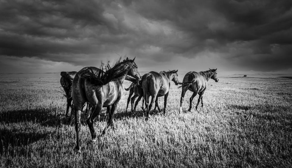 Horses1L9A4262.jpg