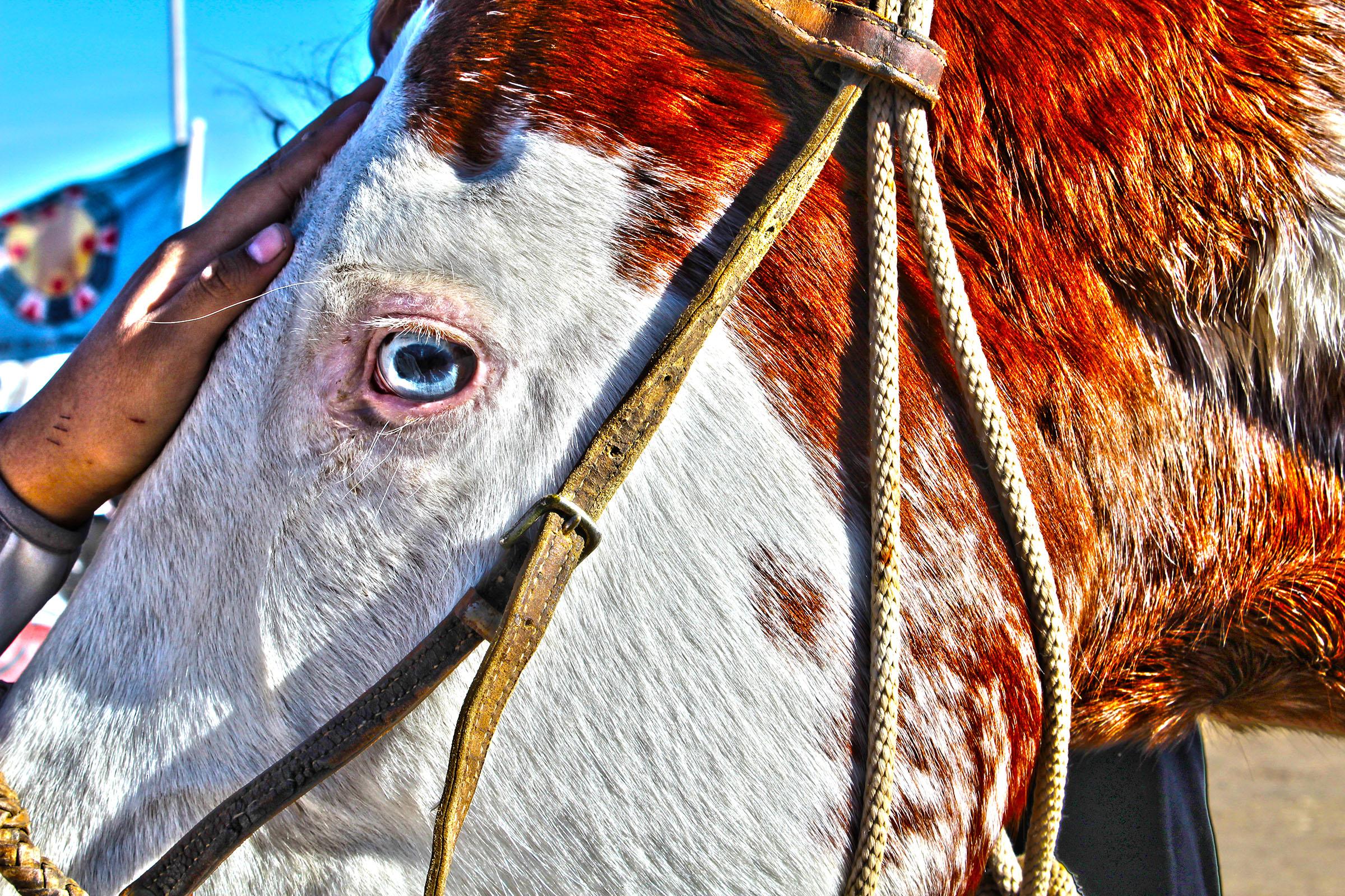 Camp Horse Blue Eyes