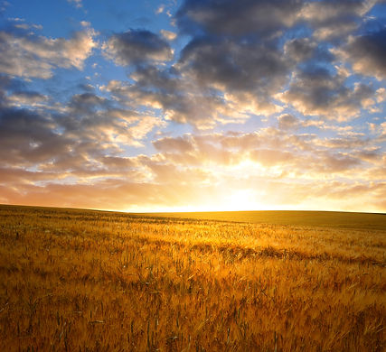 Prairie Grass.jpeg
