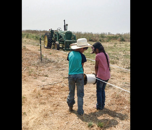 Two children practicing low stress cattle management by installing electrice fences.