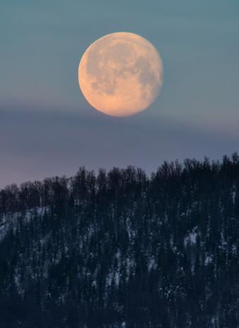 Senja strawberry moon II