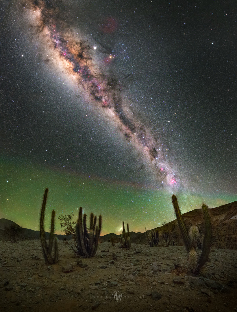 Cactus and milky way in Elqui