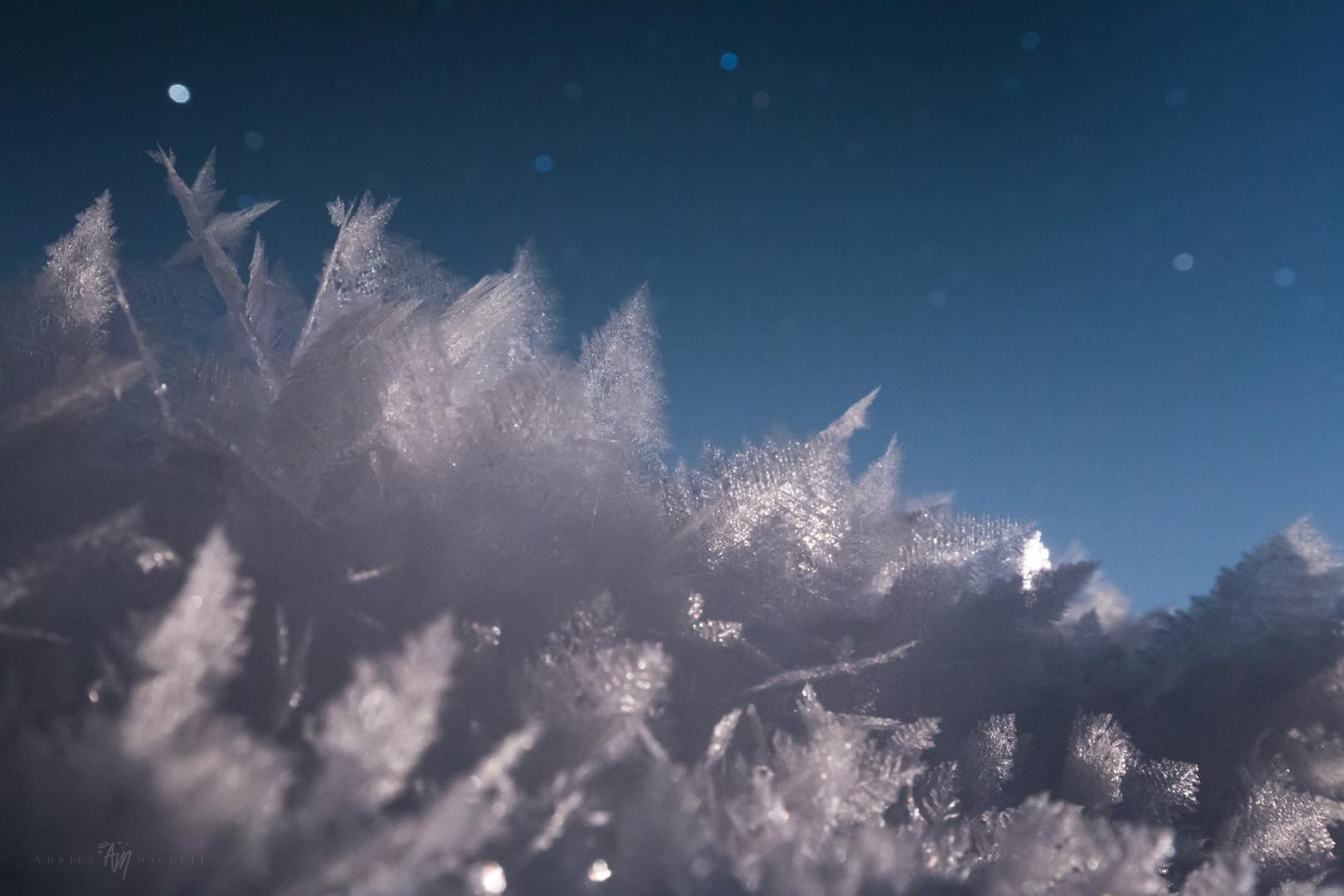Hoar frost under the night sky