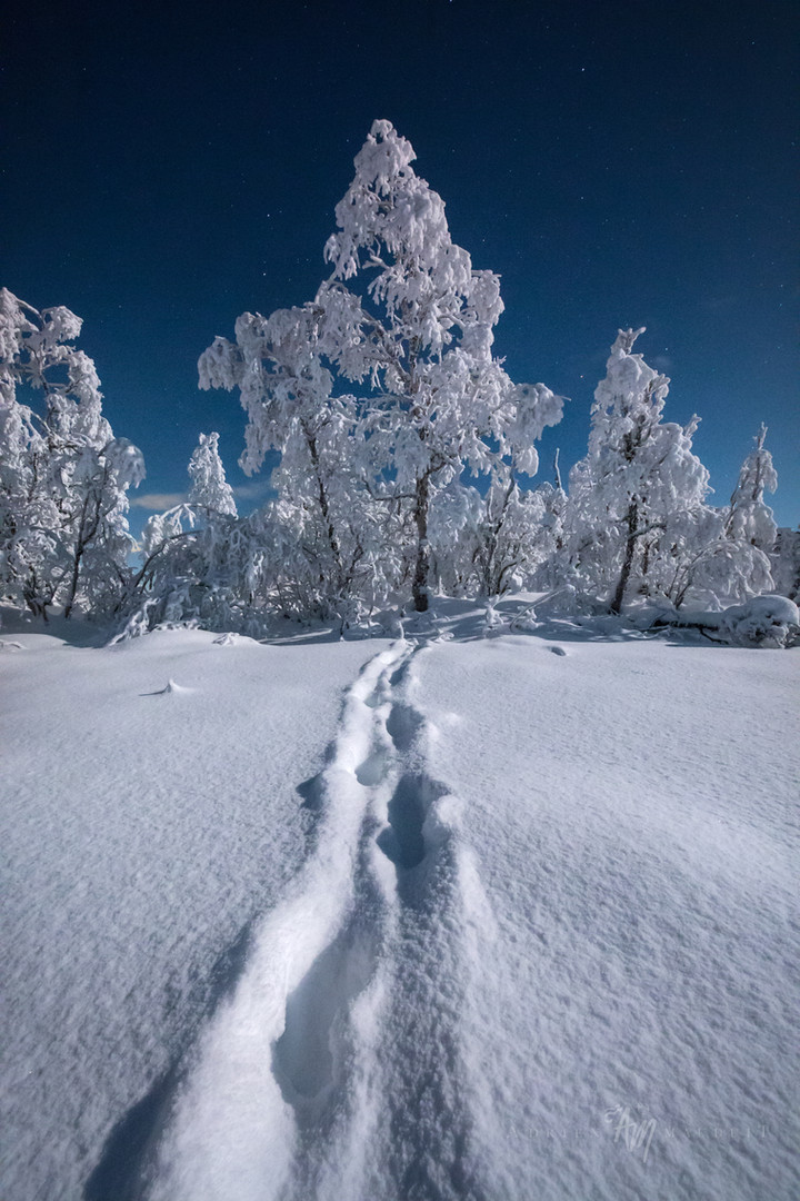 Winter Wonderland I