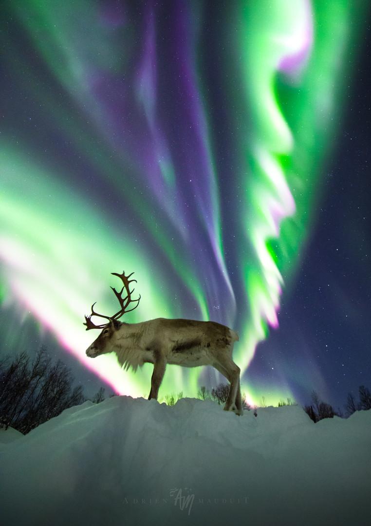 Reinulf under the aurora II