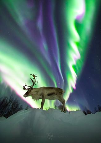 Reinulf under the aurora I