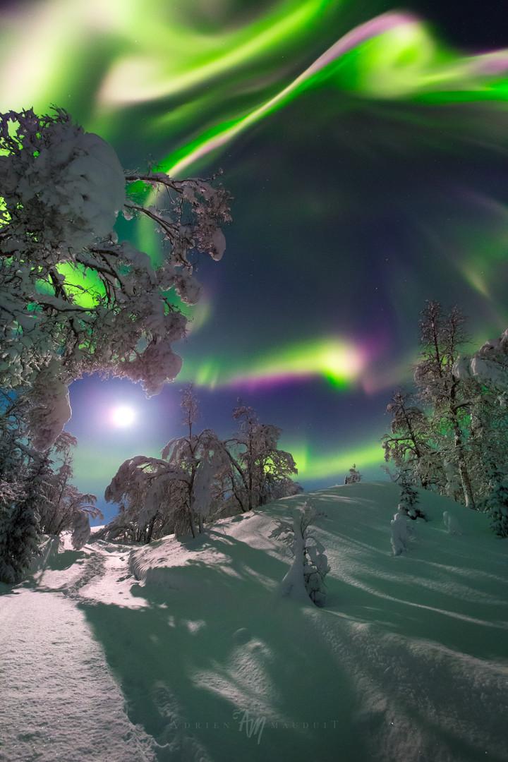 Auroral moon flower