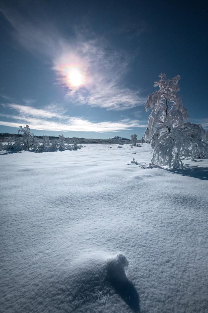 Winter Wonderland II