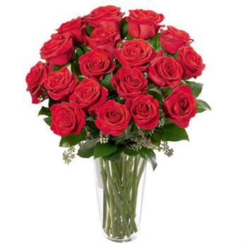 Roses Long Stem P005