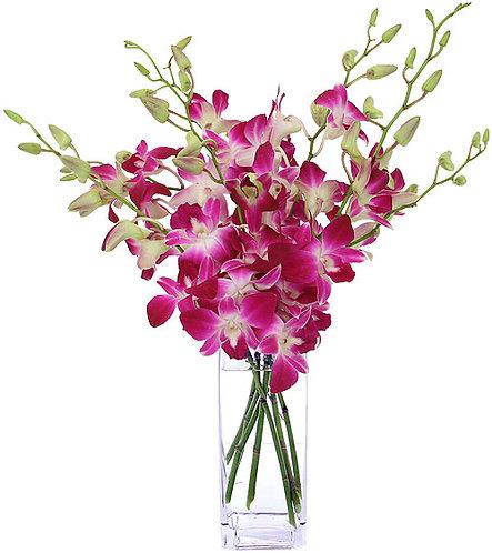 Arrangements Orchids 4004
