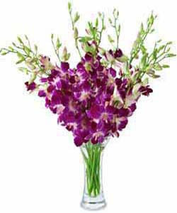 Arrangements Orchids 4003