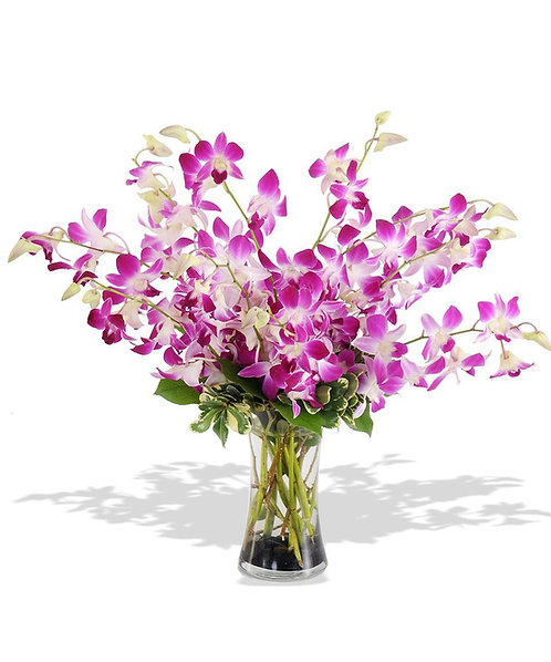 Arrangements Orchids 4015