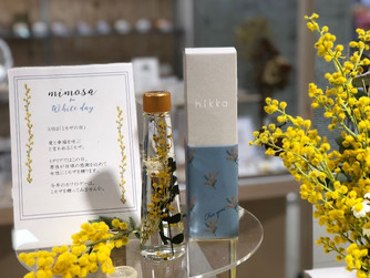 【イベント開催中】mimosa for white day 東急ハンズ広島店
