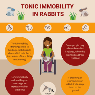 TONIC IMMOBILITY IN RABBITS