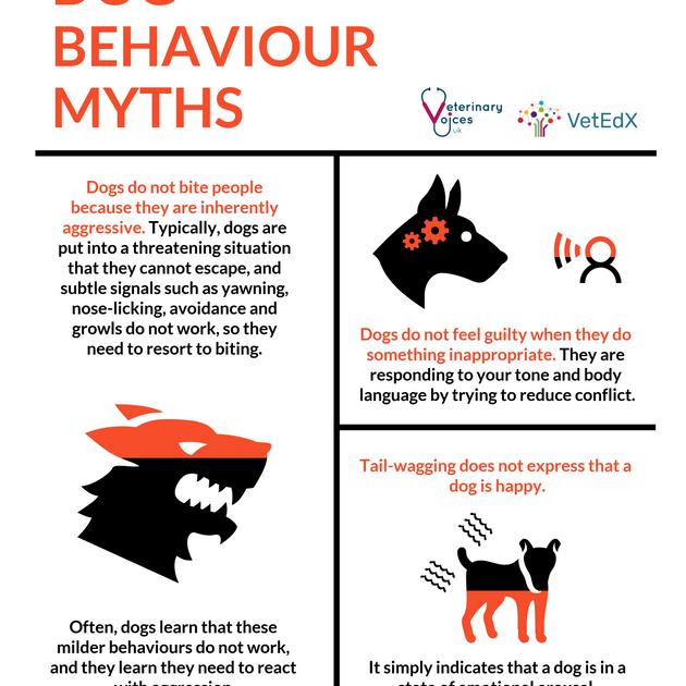DOG BEHAVIOUR MYTHS 3