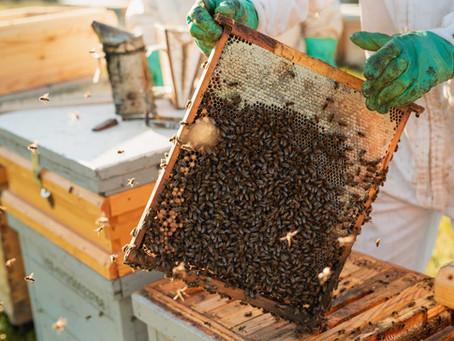 Com viuen les abelles?