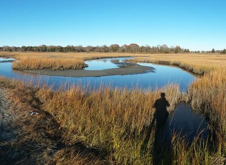 Prudence Island birding - 11/4/17