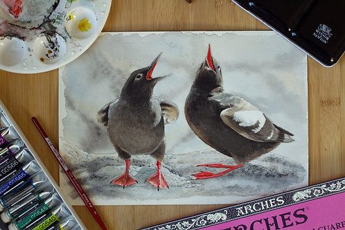 Pigeon Guillemot pair | Original