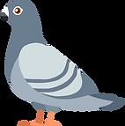 pigeon-4833070.png