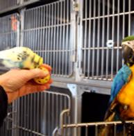 Budgerigars | birdhealth