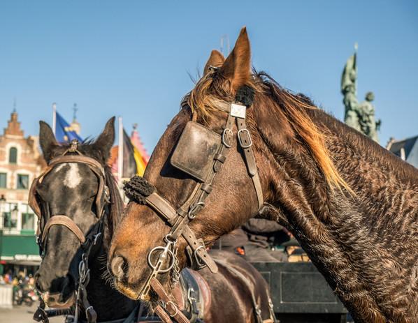 horse_new (1 of 1).jpg