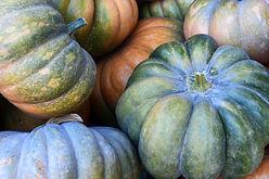 pumpkin-3680854_1920.jpg