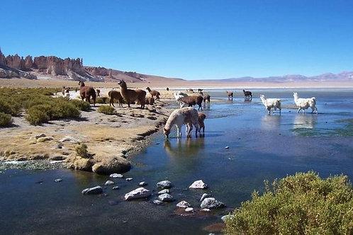Día completo Monjes de la Pacana - San Pedro de Atacama
