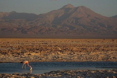 Medio día Laguna de Chaxa y Toconao - San Pedro de Atacama