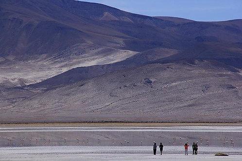 Día completo Parque Nacional Salar del Huasco