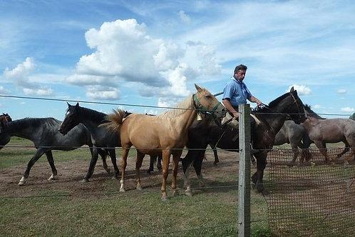 Día de campo con Fiesta Gaucha