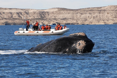 Puerto Madryn 3 días