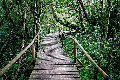 Parque Nacional Fray Jorge y Valle del Encanto