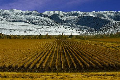 מנדוזה, ארץ השמש ויין טוב - 4 ימים