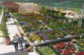 plantas y arbustos con flor