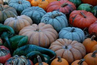Mmmmm.....Pumpkin Basics