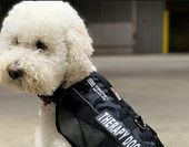 AT&T having therapy dogs help on the front lines