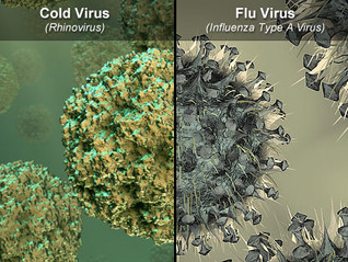 Cold or Flu.  Does It Matter?