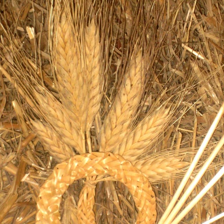 Tressage de paille à 7 épis de blé - atelier d'initiation