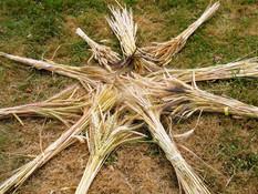 Biodiversité des blés