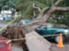 Car hit by tree, insurance covers it.