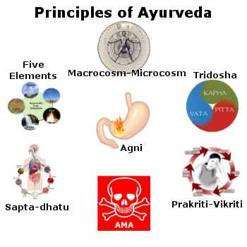 WHAT ARE THE SEVEN DHATUS (TISSUES)& ELEVEN ORGANS (FIVE SENSE ORGANS &FIVE ORGANS OF ACTION