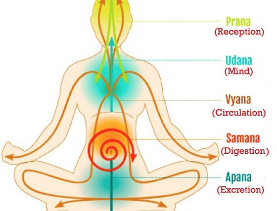WHAT IS THE ROLE OF PRANA?