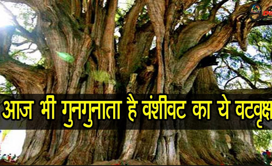 क्या महत्व है त्रिसंकटवृक्ष का?5 वटवृक्षों (अक्षयवट, पंचवट, वंशीवट, गयावट और सिद्धवट )का क्या महत्व