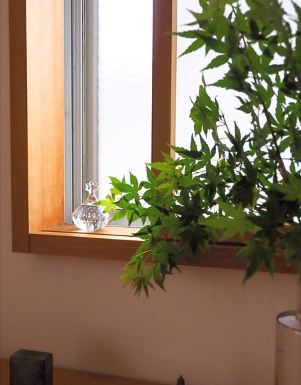 庭の植物の新緑