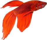 NicePng_peces-png_4105739.png
