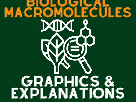 The Biological Macromolecules